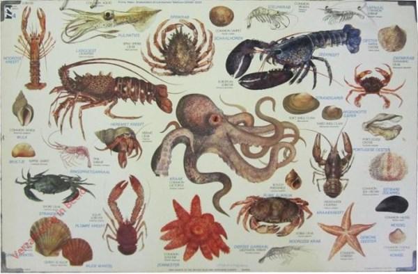 4 - Schaal- en schelpdieren